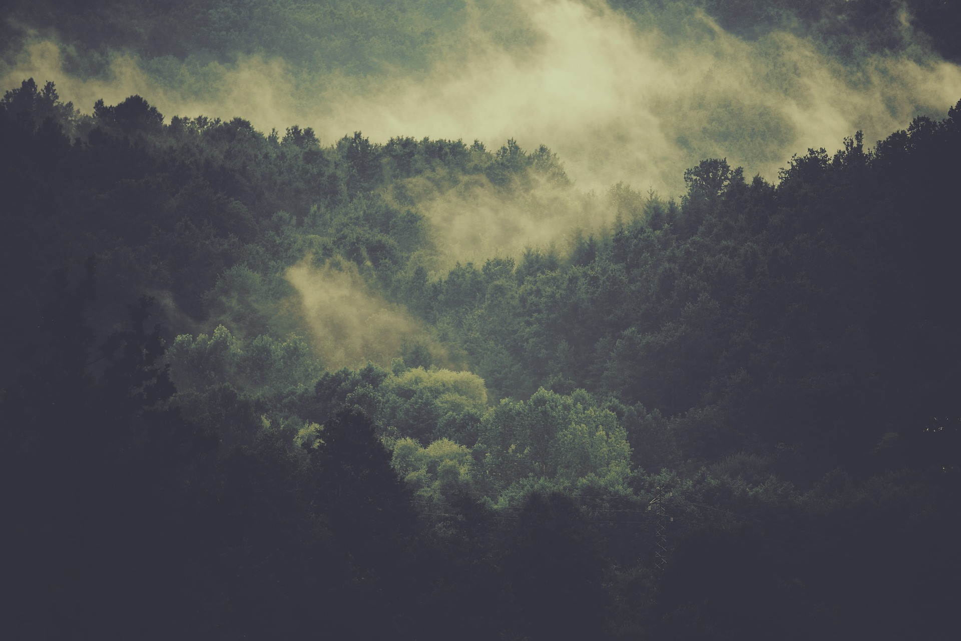 Trusting God In The Wilderness